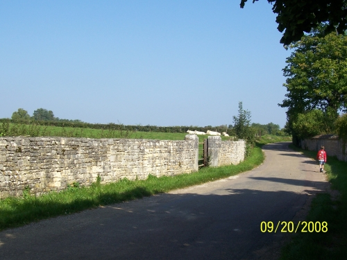 Beaven walks along our typical farmstead road in Fontaines, France.